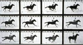 muybridge-horse