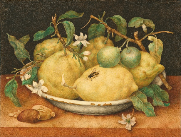giovanna_garzoni_italian_-_still_life_with_bowl_of_citrons_-_google_art_project